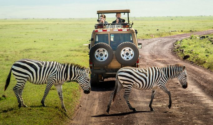 How to Plan Your Safari