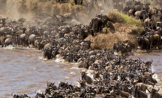 Kenya: Wildebeest Migration Safari