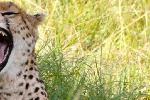 Kenya: Wildebeest Migration Safari